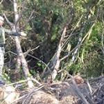 Polícia Ambiental adverte proprietário depois de verificar destruição de floresta em área de preservação