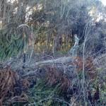 Ambiental realiza fiscalização e constata irregularidades em propriedades rurais