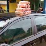 Cocaína na BR 277 São Luiz do Purunã
