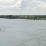Proibição a pesca de espécies nativas1