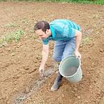 Adubação agroecológiica