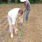 Plantio feito pelos agricultores