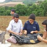 Preparação das sementes crioulas