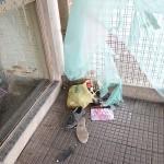 Rodoviária de Palmeira é alvo de vandalismo-2