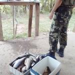 Apreensão de peixes pela Polícia Ambiental no Rio Iguaçu em São João do Triunfo-2