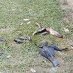 Apreensão de peixes pela Polícia Ambiental no Rio Iguaçu em São João do Triunfo-3
