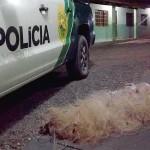 Apreensão de redes pela Polícia Ambiental no Rio Iguaçu em São João do Triunfo