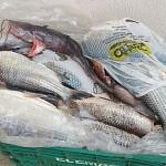 Pescadores são presos por pesca predatória-4