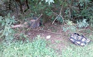 Homem é encontrado morto às margens da rodovia