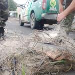 Polícia Ambiental prende três por pesca predatória em São João do Triunfo_2