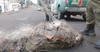 Polícia Ambiental prende três por pesca predatória em São João do Triunfo_5