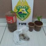 Apreensão de mudas de maconha e droga dessecada_maconha na Vila Palmeirinha