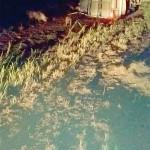 Caminhão carregado de sauínos tomba na PR 151_1