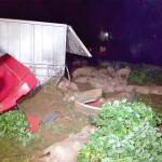 Caminhão carregado de sauínos tomba na PR 151_5