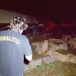 Caminhão carregado de sauínos tomba na PR 151_7