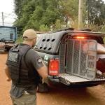 Caminhão que teria sido roubado em Palmeira é recuperado pela polícia_4_foto Polícia Civil