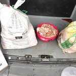 Furto de suínos em Palmeira-3_foto divulgação PM