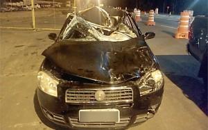 Fiat Siena colide contra cavalo na BR-277 em Palmeira__PRF