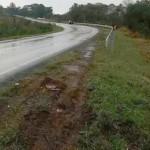 Caminhão carregado de cerveja tombou na PR 151 teve carga saqueda e deixou dois feridos-foto 2 rede social